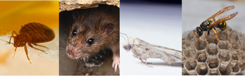 Pest Control in Kingston Upon Thames
